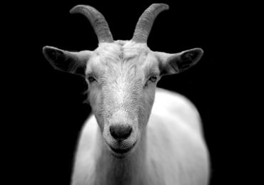 Ritholtz Says Lynch is the GOAT