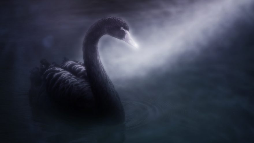 Palantir is Stockpiling Gold to Hedge Against 'Black Swan Event'
